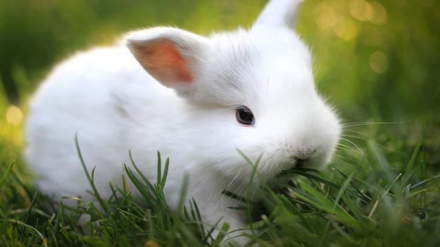 新手養兔寶寶的攻略。你知道養兔子必備的套裝嗎? - 每日頭條