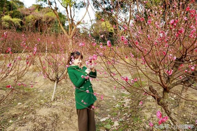 向春天出發丨桃之夭夭,灼灼其華,桃花之旅從這裡浪漫開啟 - 每日頭條