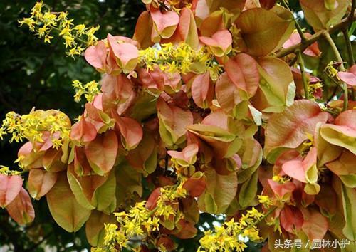 1-12月份常見開花植物的花期大全。收藏了! - 每日頭條