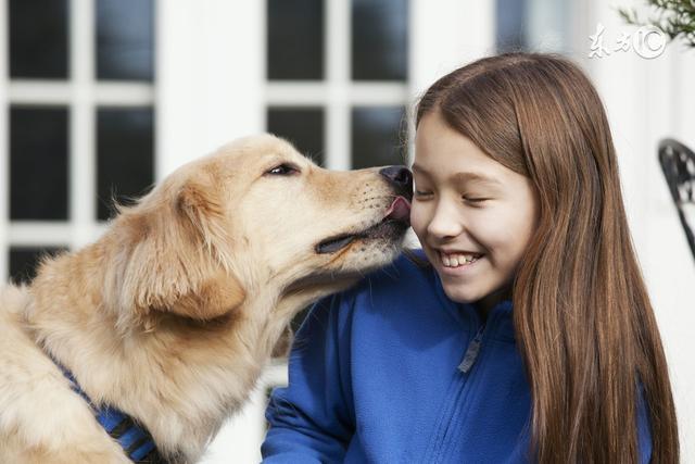 汪星人想說對不起。如何將狗狗咬傷危險降到最低? - 每日頭條