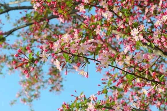 問花節:鄭州綠博園裡3月30日開幕! - 每日頭條