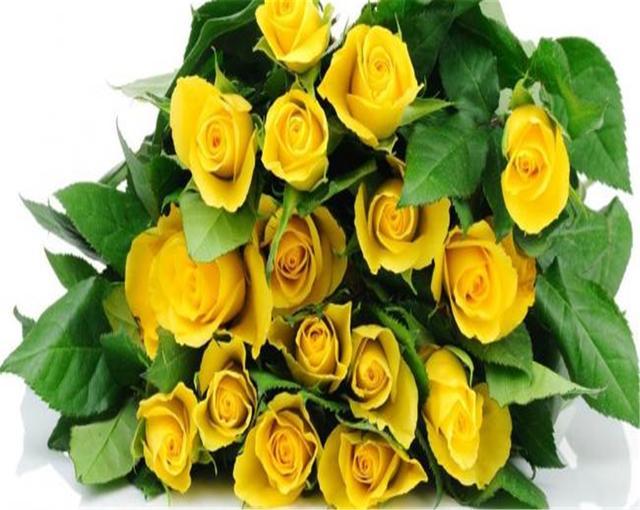 黃玫瑰的花語是什麼你知道嗎?本文為你解答黃玫瑰的花語 - 每日頭條