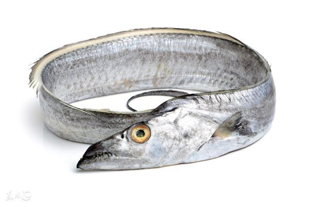 帶魚的營養價值 - 每日頭條
