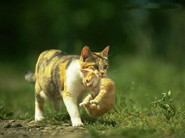 母貓吃掉小貓的科學道理是什麼?真的是因為被老鼠看過了? - 每日頭條
