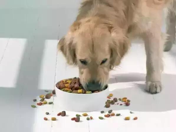 狗狗肥胖指數測試!看看你家狗狗能得多少分? - 每日頭條