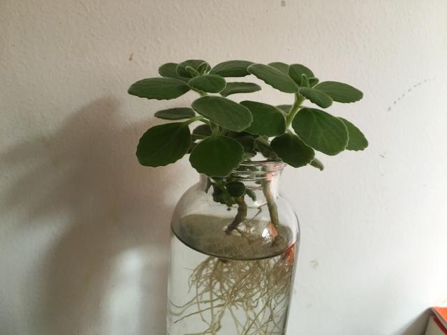 適合在辦公室養的盆栽植物 - 每日頭條