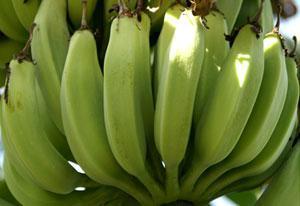 香蕉分為6大種類。那麼黃色表皮上有黑色斑點的香蕉到底好不好? - 每日頭條