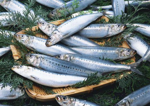沙丁魚的營養到底有多驚人 - 每日頭條