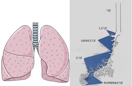 醫生介紹:肺炎的癥狀和臨床表現總結 - 每日頭條