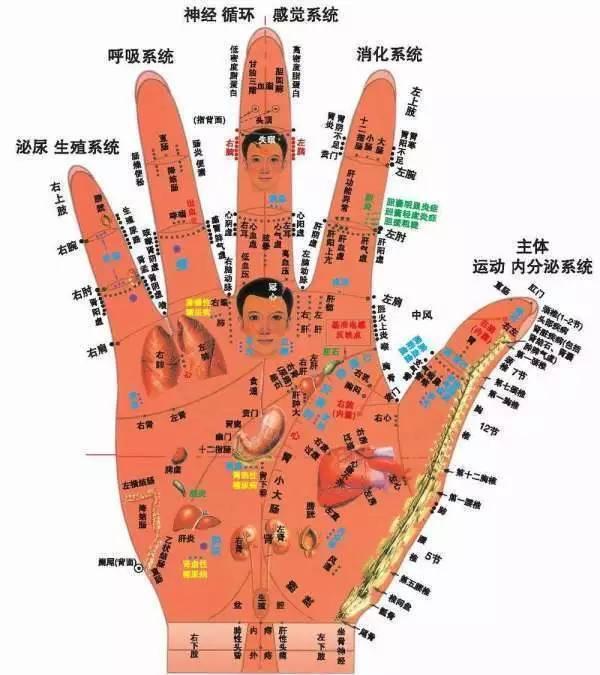 針灸專業必備——全息圖譜 - 每日頭條