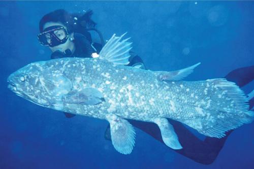 生物界的資深活化石——腔棘魚 - 每日頭條