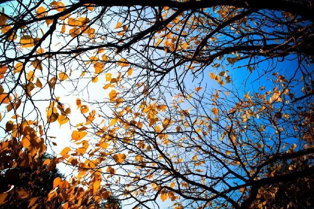 十首元曲說秋:秋葉靜美,秋華如丹 - 每日頭條