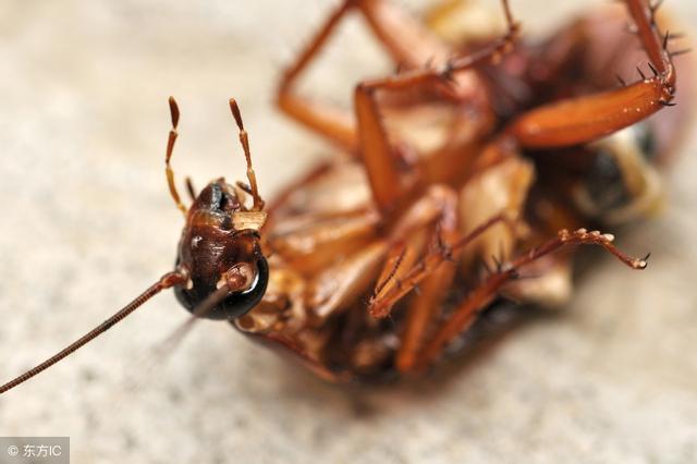 廚房蟑螂太多怎麼辦?只要4招,就把廚房蟑螂連根拔起! - 每日頭條