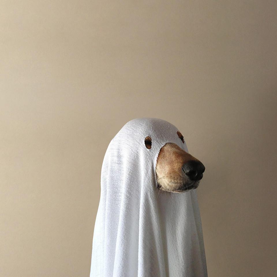 Spoopy Dog
