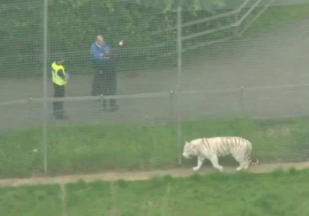 TV grabs of a Tiger enclosure
