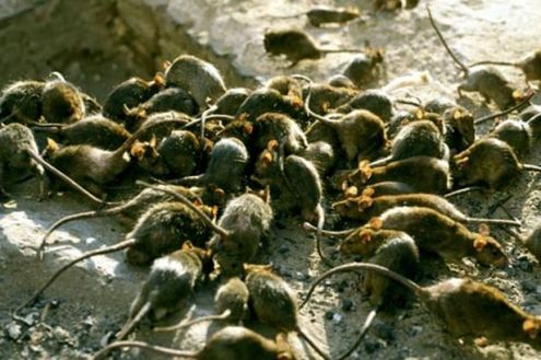 FIRST POST - SEPTEMBER 22, 2013 - OBAMA'S TERRORISTS ATTACK CHRISTIAN QUARTERS OF DAMASCUS!; AL-QAEDA RATS BEHEAD 40 FSA RODENTS; OBAMA WAR CRIMINAL; 1