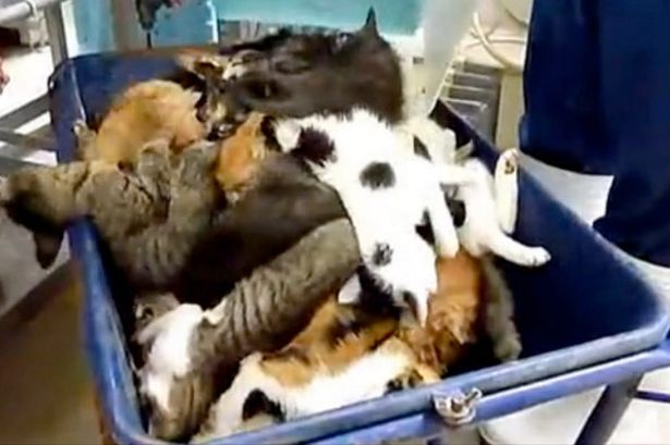 Horror: Cats are dumped after being gassed in a 'dream box'