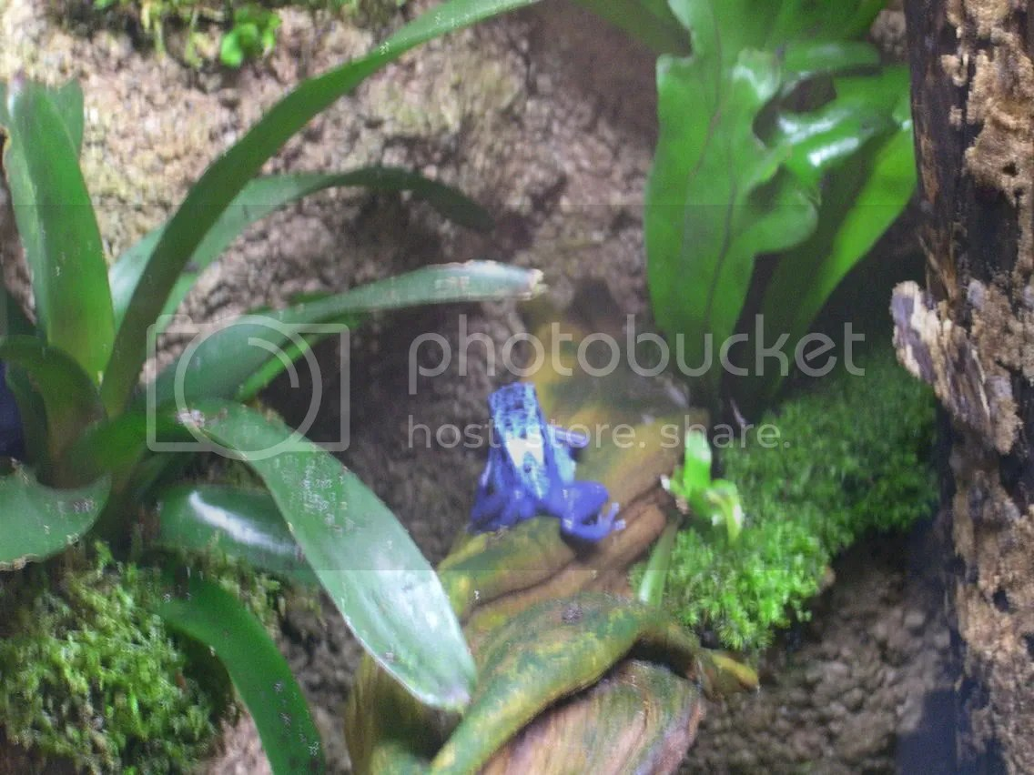 El Naturalista Damen Leder Stiefelette BEE ND81 Nilashop
