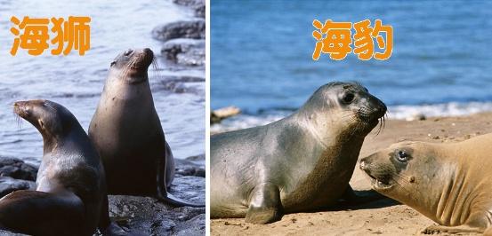 海洋生物認知 海象海豹海獅傻傻分不清? - 壹讀