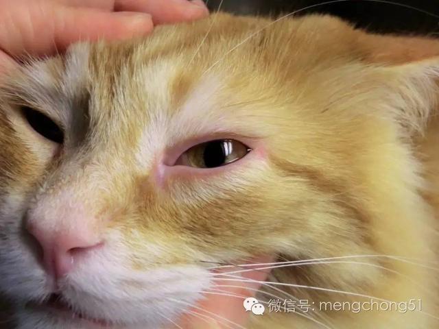 貓咪感冒打噴嚏流鼻水怎麼辦? - 壹讀
