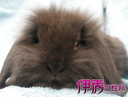 可愛的獅子兔圖片欣賞 飼養的6大注意事項你知道嗎 - 壹讀