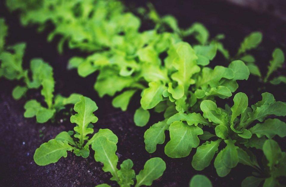 在棲霞有個菜園子。這就是嚮往的生活 - 壹讀