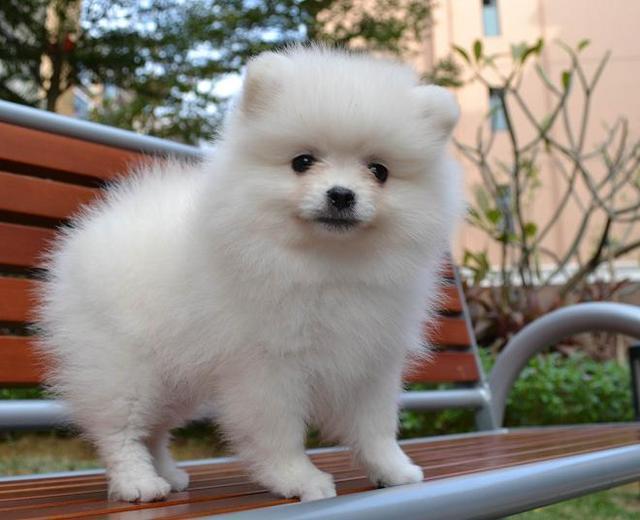 世界上最美的狗狗,看看你家的狗狗在里嗎? - 壹讀