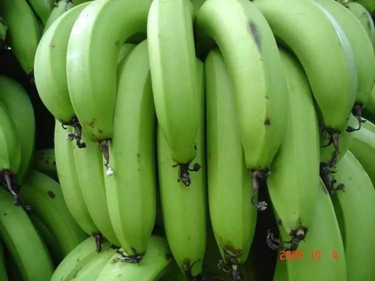 圖說香蕉優質高產的六大關鍵技術 - 壹讀