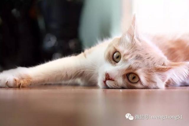 貓咪驅蟲篇——寄生蟲,你給我站住! - 壹讀