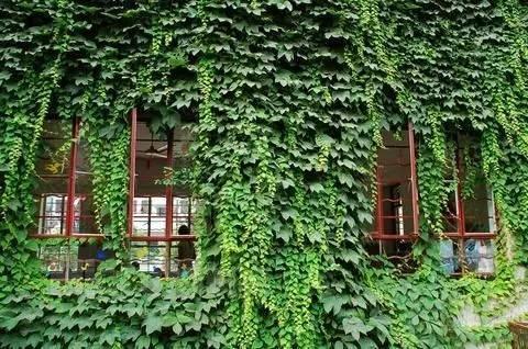 植物爬滿牆,攀援植物大合集 - 壹讀