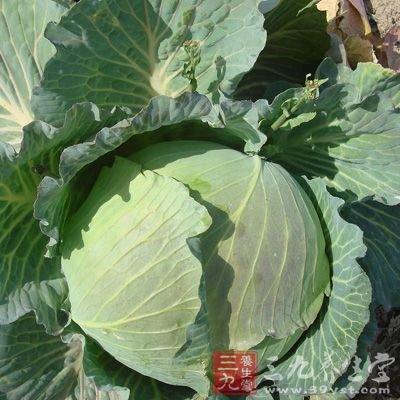 甘藍菜的營養價值 甘藍菜的做法及功效 - 壹讀
