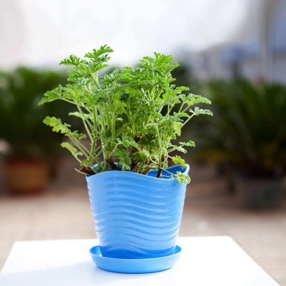 夏天來了,你家裡種了這些好養又便宜的驅蚊香草了嗎 - 壹讀