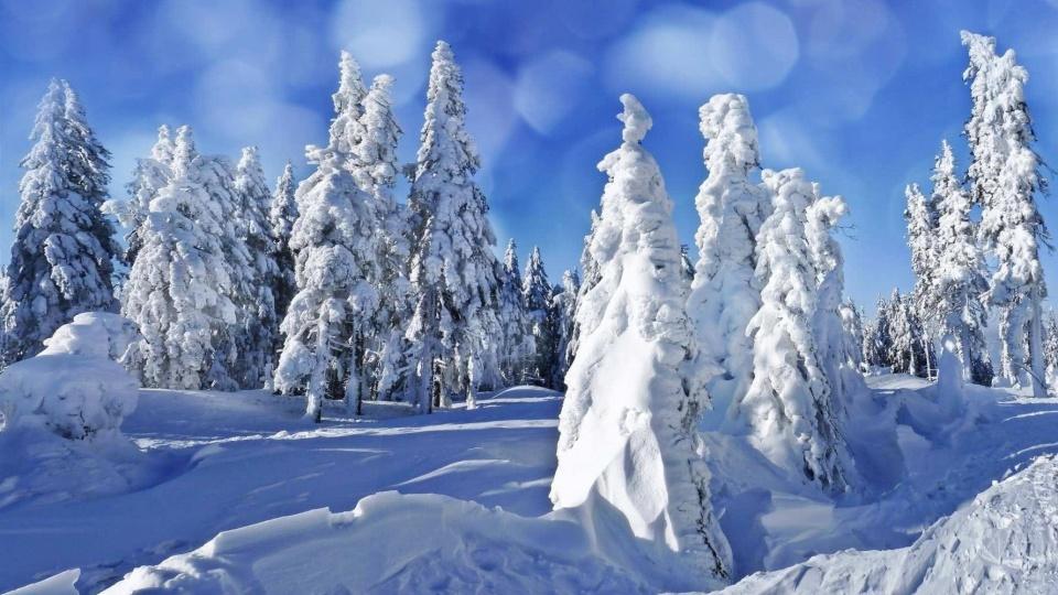 俄羅斯的冬天有多冷?零下60度連熊都受不了。當地人是這樣過冬 - 壹讀