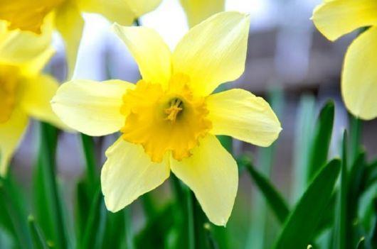 美麗的鮮花及其寓意 - 壹讀