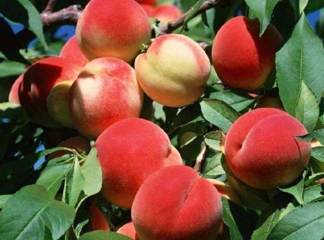 如果全世界只剩這6種紅色水果。讓你選一個吃。你最愛吃哪一個? - 壹讀