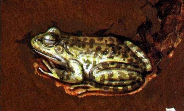 地球上15大冬天冬眠的動物。最後一種一生3/4的時間都在睡覺 - 壹讀