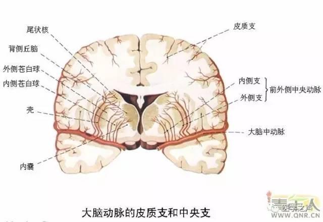 收藏!最全神經系統解剖圖 - 壹讀