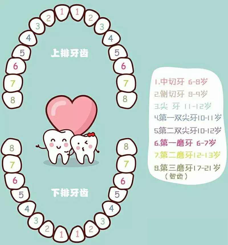 河馬牙醫|正常人有多少顆牙齒? - 壹讀