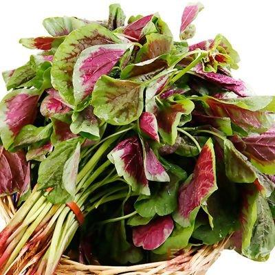 紅莧菜的營養價值 養生功效與作用 食用禁忌 - 壹讀
