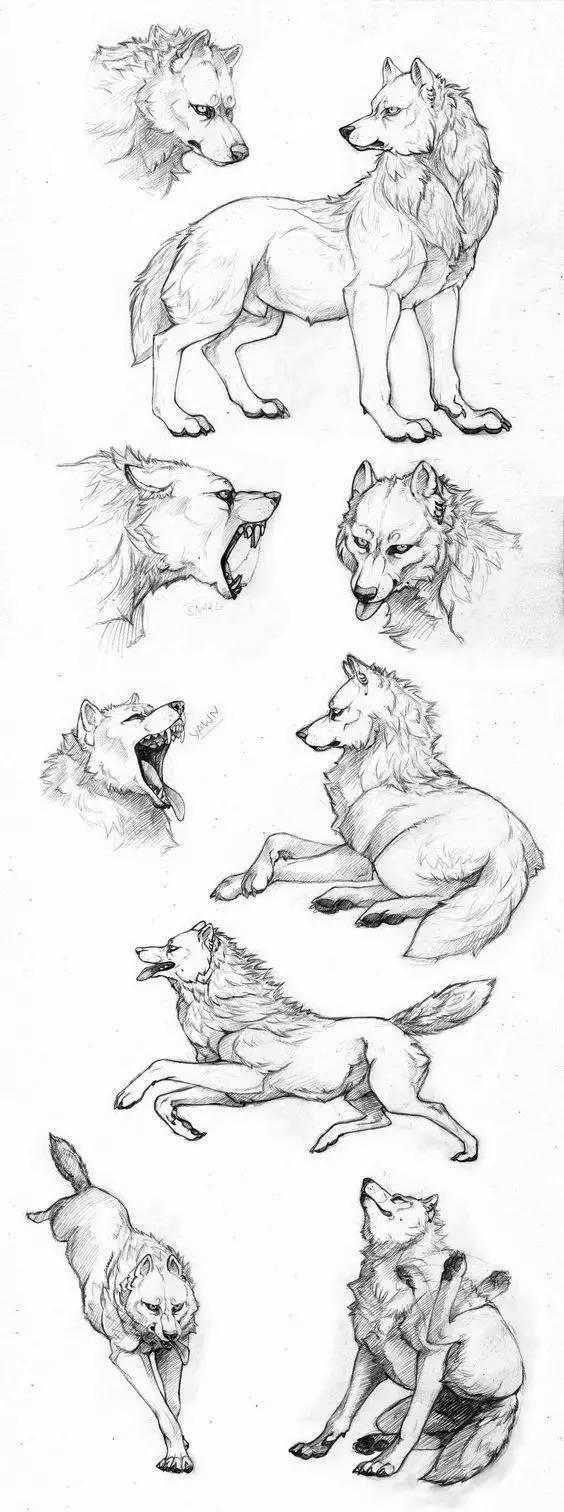 繪畫基礎教程:狼的畫法 - 壹讀