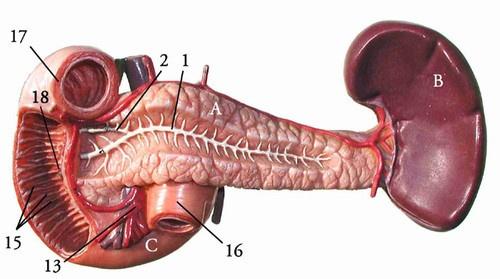 部分脾動脈栓塞術(PSE)治療脾功能亢進 - 壹讀