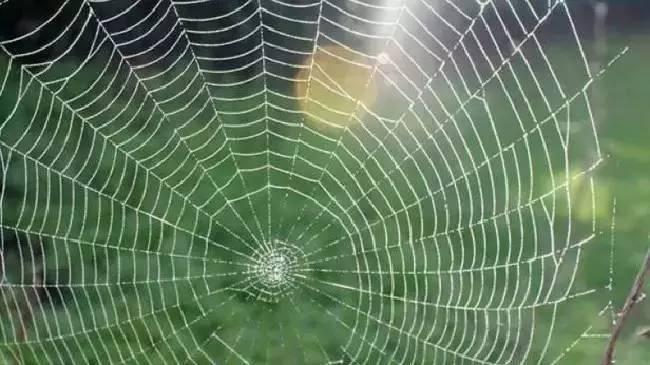 七種方法讓你的家遠離澳洲蜘蛛 - 壹讀