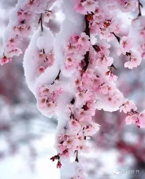 初冬,和梅花來一場美麗的邂逅 - 壹讀