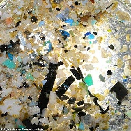 Web Wallpaper Hd 太平洋垃圾岛:绳子浮标塑料垃圾组成 双语 新浪教育 新浪网