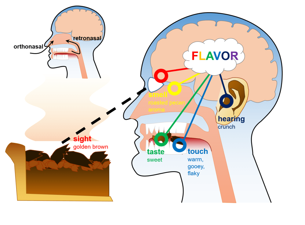 medium resolution of figure 1 our perception of flavor depends on combined information from all five of our senses the aroma of a roasted pecan pie stimulates our odor sensing