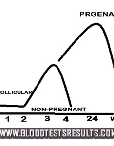 Progesterone levels chart also low hi normal rh bloodtestsresults