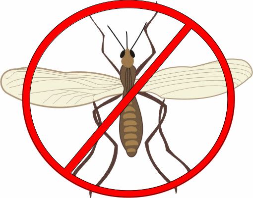 25 ways to get rid of gnats inside