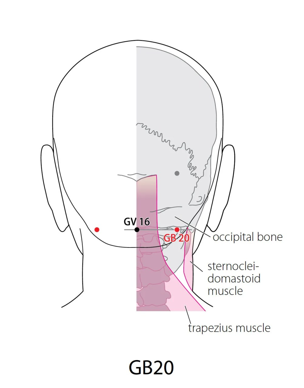 medium resolution of indications headache visual dizziness pain and stiffness of the neck painful reddening of the eyes deep source nasal congestion pain in the shoulder