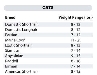 Cat weight chart by breed also for cats archives my kitty caremy care rh mykittycare