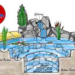 Pond Ecosystem Diagram Whale Digestive System What Is The Big Deal About A Anyway